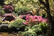 Sunny Japanese Garden Print by Carol Groenen