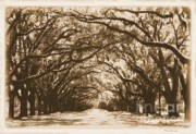 Live Oak Digital Art - Sunny Southern Day with Old World Framing by Carol Groenen