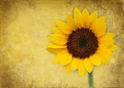 Sabrina L Ryan - Sunny Sunflower