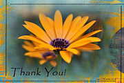 Thank You Art - Sunny Thank You - Greeting Cards by Jean OKeeffe by Jean OKeeffe