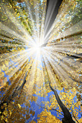 Autumn Light Posters - Sunrays in the forest Poster by Elena Elisseeva