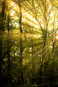 Tree Art Print Framed Prints - Sunrays Through the Trees Framed Print by Natalie Kinnear