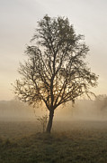 Morning Backlight Prints - Sunrise and beautiful tree Print by Matthias Hauser