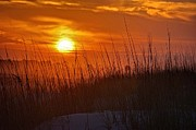 Featured Digital Art Acrylic Prints - Sunrise and Grasses Acrylic Print by Michael Thomas
