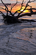Beach Photographs Art - Sunrise at Driftwood Beach 6.3 by Bruce Gourley