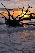 Beach Photographs Art - Sunrise at Driftwood Beach 6.4 by Bruce Gourley