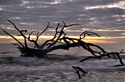 Beach Photographs Art - Sunrise at Driftwood Beach 6.5 by Bruce Gourley