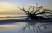 Beach Photographs Art - Sunrise at Driftwood Beach 6.6 by Bruce Gourley