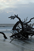 Beach Photographs Art - Sunrise at Driftwood Beach 6.7 by Bruce Gourley