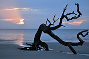 Beach Photographs Art - Sunrise at Driftwood Beach 7.1 by Bruce Gourley