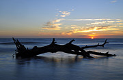 Beach Photographs Art - Sunrise at Driftwood Beach 7.2 by Bruce Gourley
