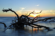 Beach Photographs Art - Sunrise at Driftwood Beach 7.4 by Bruce Gourley
