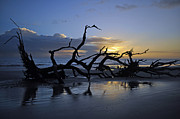 Beach Photographs Art - Sunrise at Driftwood Beach 7.5 by Bruce Gourley