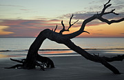 Beach Photographs Art - Sunrise at Driftwood Beach 7.6 by Bruce Gourley