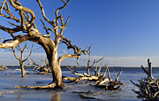 Beach Photographs Art - Sunrise at Driftwood Beach 7.9 by Bruce Gourley