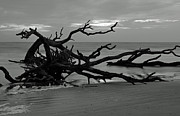 Beach Photographs Art - Sunrise at Driftwood Beach BW by Bruce Gourley