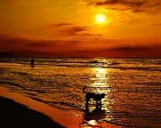 Nick Zelinsky - Sunrise Beach Walk