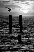 North Carolina Birds Prints - Sunrise Descent BW - Outer Banks Ocracoke Print by Dan Carmichael