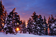 Christmas Trees Posters - Sunrise Dreams Poster by Darren  White