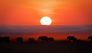 Herd Of Elephants Posters - Sunrise Elephants Poster by Naoki Takyo