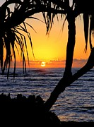 Mary Deal Prints - Sunrise Fuji Beach Kauai Print by Mary Deal