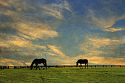 Grazing Horse Posters - Sunrise Graze Poster by Darren Fisher