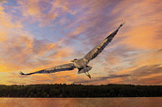 Tracy Munson - Sunrise Heron