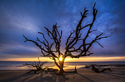 Tree Roots Prints - Sunrise Jewel Print by Debra and Dave Vanderlaan