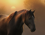 Equine Photo Posters - Sunrise on Planet Earth Poster by Ron  McGinnis