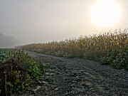 Corn Field Prints - Sunrise over Country Road Print by Olivier Le Queinec