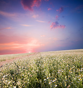Sunrise Over Flower Land Print by Michal Bednarek