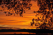 Yellow Trees Posters - Sunrise over the Lake Poster by Cheryl Young