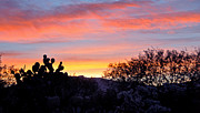 Jon Van Gilder Framed Prints - Sunrise Over The Sonoran Desert Framed Print by Jon Van Gilder