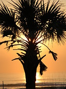 Joanne Askew - Sunrise Palm 