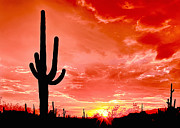 Sunrise Saguaro National Park Print by Nadine and Bob Johnston