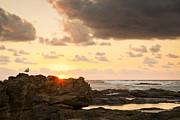 Tim Hester - Sunrise Seagull On Rocks