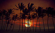 Beach Pyrography - Sunrise Silhouette of Tall Palm Trees  by Katrina Brown