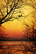 Two Crows Framed Prints - Sunrise Submission Framed Print by Rebecca Sherman