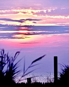 Bethany Beach Posters - Sunrise Through the Dunes Poster by Kim Bemis