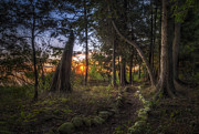 Door County Prints - Sunrise through the trees Print by Scott Norris