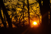 Kathleen McGinley - Sunrise Through Trees -...