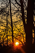 Kathleen McGinley - Sunrise Through Trees