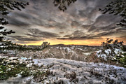 Winter Trees Photos - Sunset 2 by Jason Green