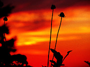 Sunset 365 20 Print by Tina M Wenger