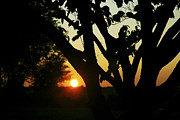 Indiana Landscapes Prints - Sunset and Tree 1 Print by James Blackwell JR