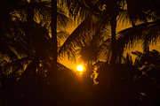 Vorakorn Kanokpipat - Sunset At Coconut Tree