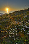 Blue Green Wave Photos - Sunset at the beach  White flowers on the sand by Guido Montanes Castillo