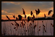 Michaela Preston Framed Prints - Sunset at the Pond 3 Framed Print by Michaela Preston