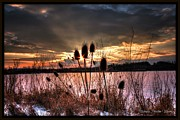 Michaela Preston Framed Prints - Sunset at the Pond 4 Framed Print by Michaela Preston