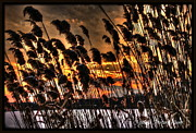 Michaela Preston Metal Prints - Sunset at the Pond 5 Metal Print by Michaela Preston